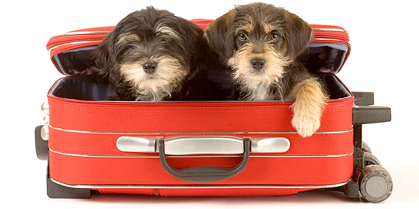 six-tips-for-traveling-with-pets